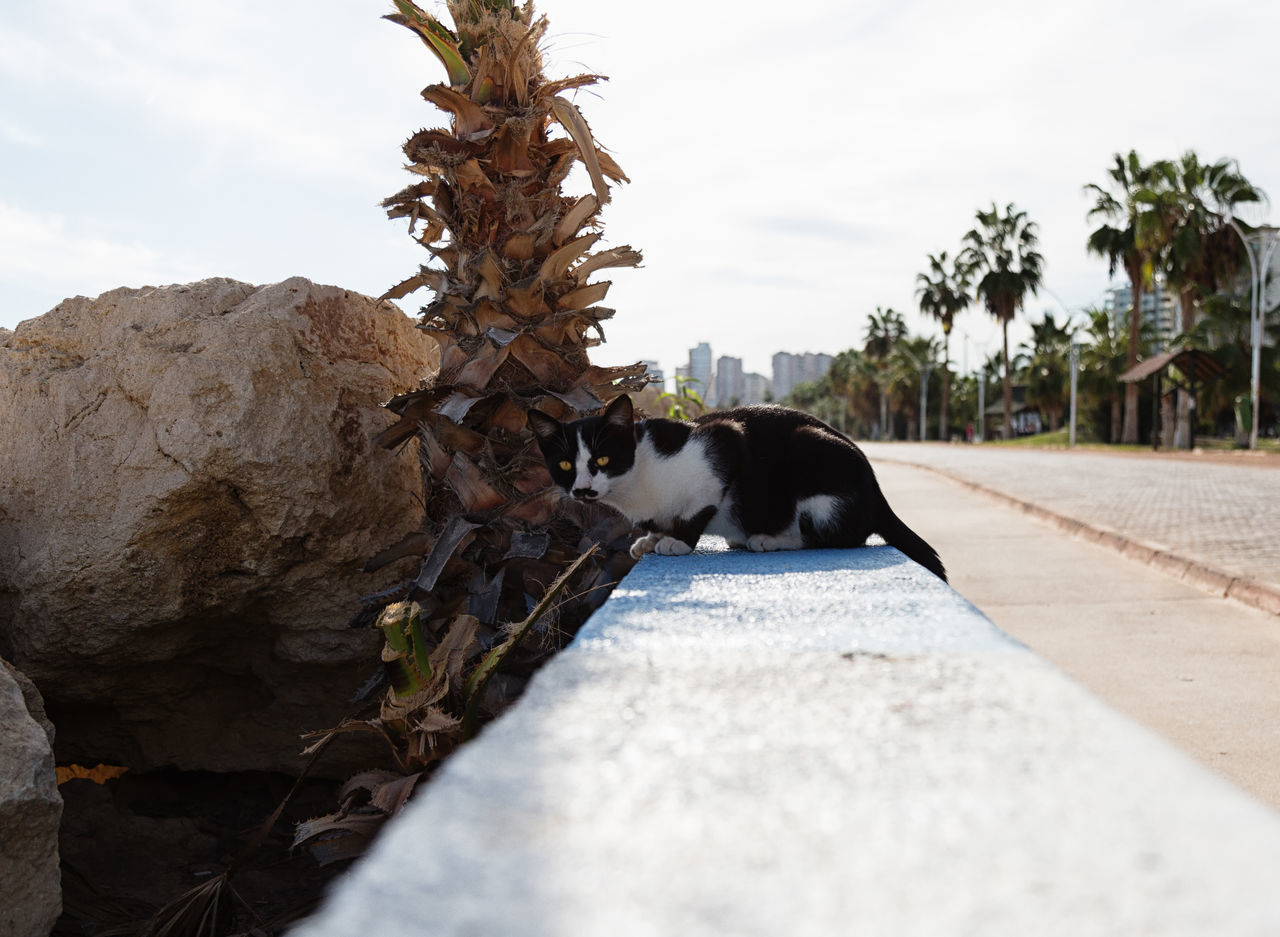 Street Cats Animal Themes Boulder Cats Coastline Day Domestic Animals Feline Feline Portraits Mammal Mersin Turkey Nature No People One Animal Outdoors Rock Formation Sky Street Cats Tree