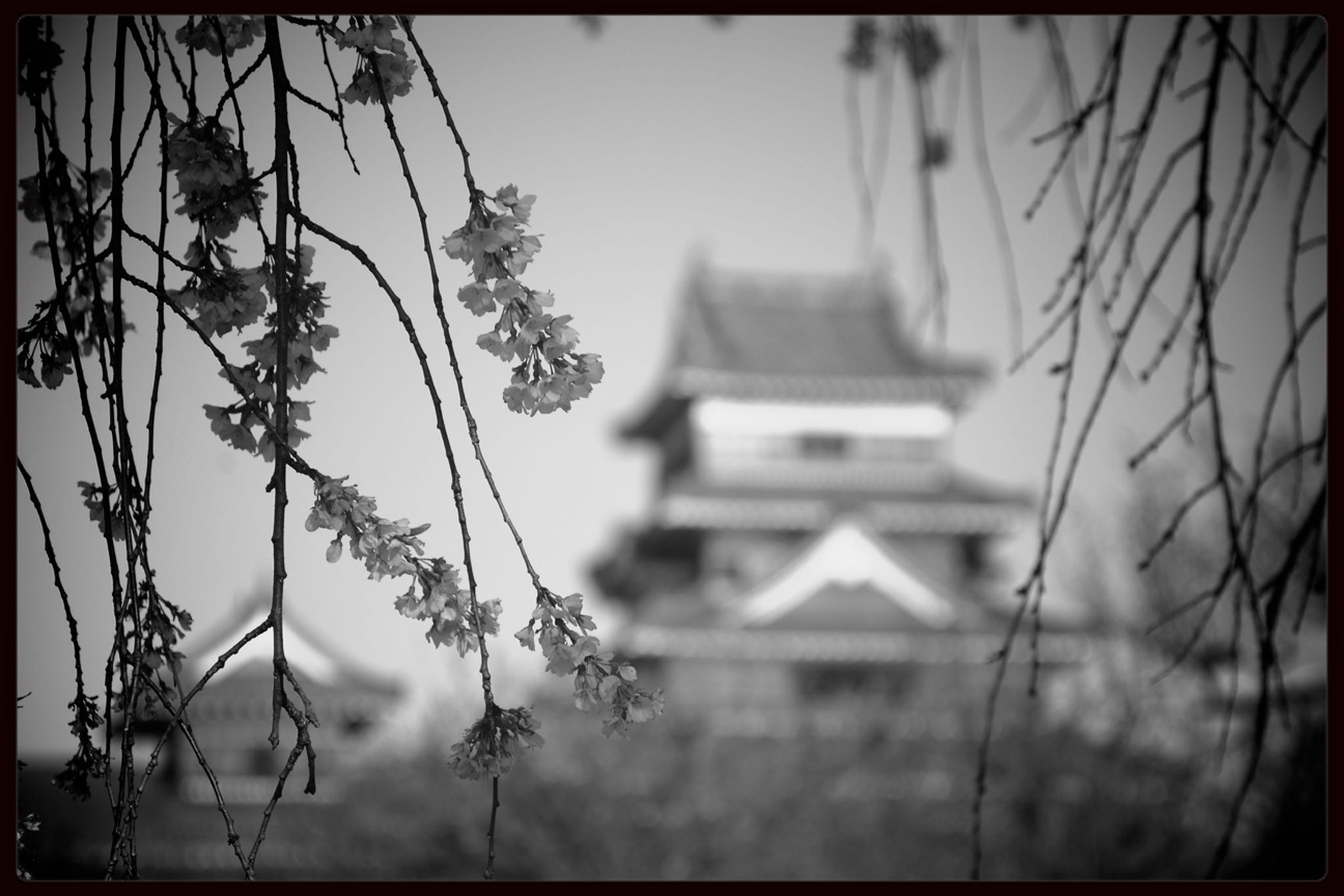 growth, flower, plant, building exterior, built structure, architecture, focus on foreground, stem, auto post production filter, house, selective focus, close-up, transfer print, nature, freshness, fragility, low angle view, sky, day, no people