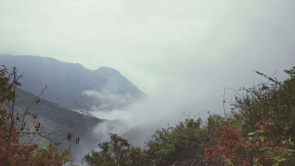 Fog Mountain Nature Outdoors No People Forest Landscape Beauty In Nature Tree Sky Day Morning Nature Meghalaya Northeast India Meghalaya Shillong Beauty In Nature Nature Photography Meghalaya India Meghalayatourism Meghalaya Foggy Morning Foggy Weather Foggy Landscape Foggy Mountains Fog In The Trees