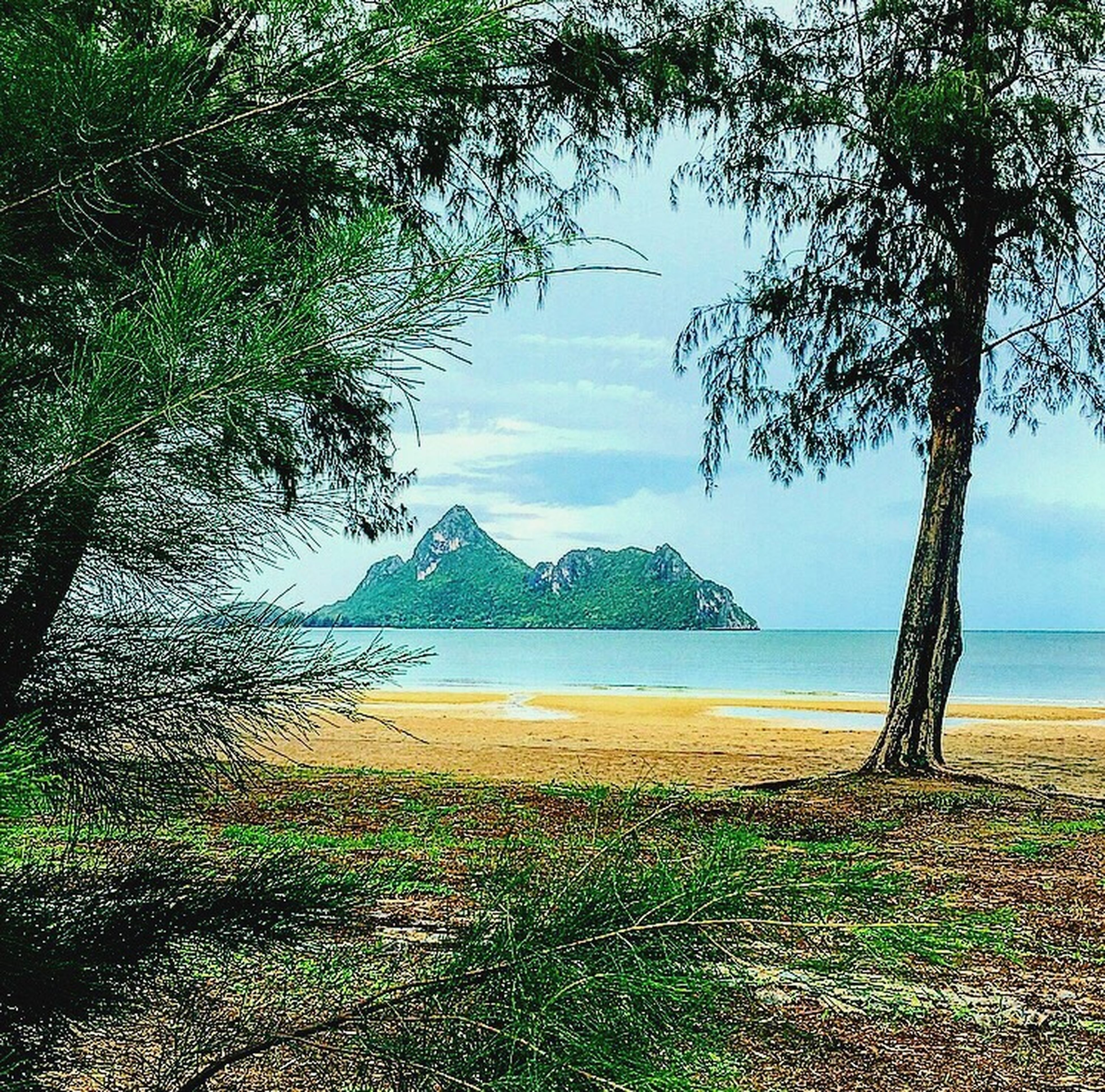 tree, water, sea, tranquil scene, scenics, tranquility, sky, branch, beach, lake, tree trunk, beauty in nature, green color, nature, growth, blue, mountain, non-urban scene, day, shore, distant, coastline, outdoors, tourism, no people, vacations, seascape, remote