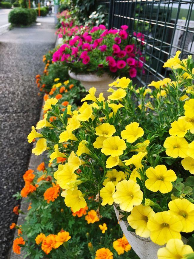 PhotobyTaka ✨☺️✨ Flower Japan Love 咲いている 写真が好き
