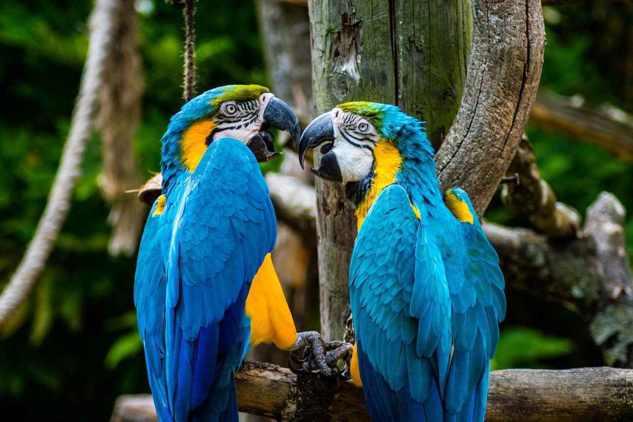 Beautiful stock photos of pfau, Animal Themes, Animal Wildlife, Animals In The Wild, Bird