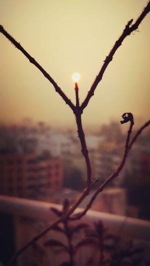 Beauty In Nature Sunrise Plants 🌱