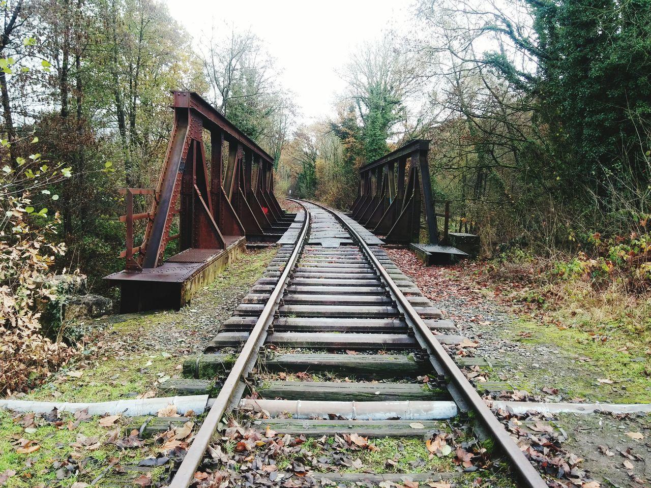 Nature Bridge Herbststimmung Bahnschienen Schienen Non-urban Scene Non Urban Scene Brücke Herbstmelancholie Novemberrain November Moody Weather