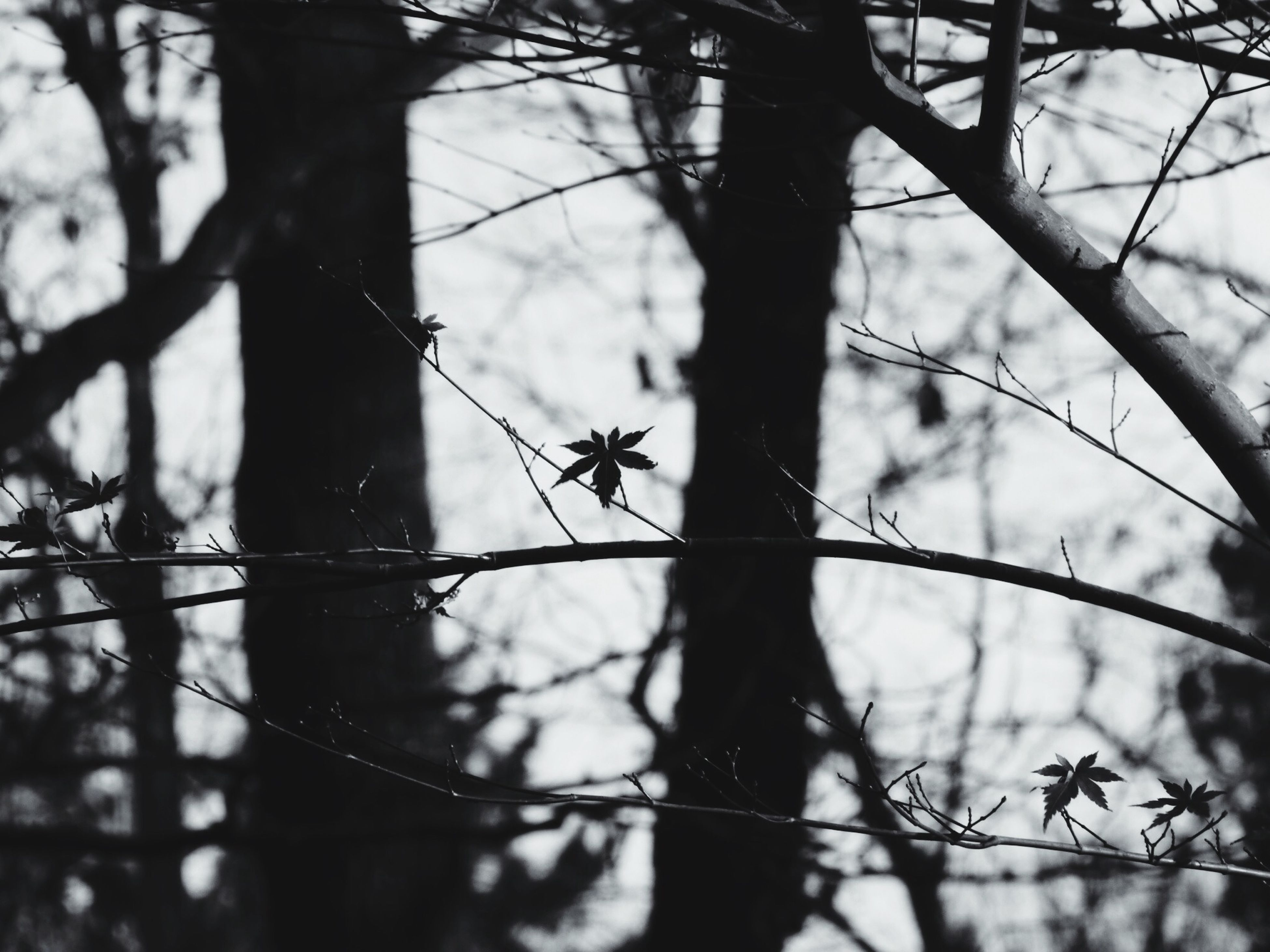 branch, tree, focus on foreground, bare tree, silhouette, tree trunk, nature, close-up, fence, wildlife, twig, no people, outdoors, protection, tranquility, animals in the wild, animal themes, day, selective focus, forest