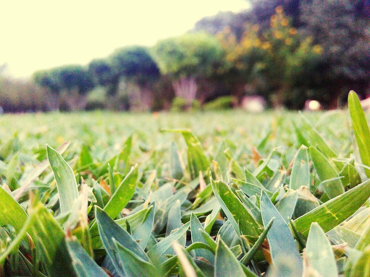 Green Nature Greenphotos Greenlove Beautygreen Garden Photography