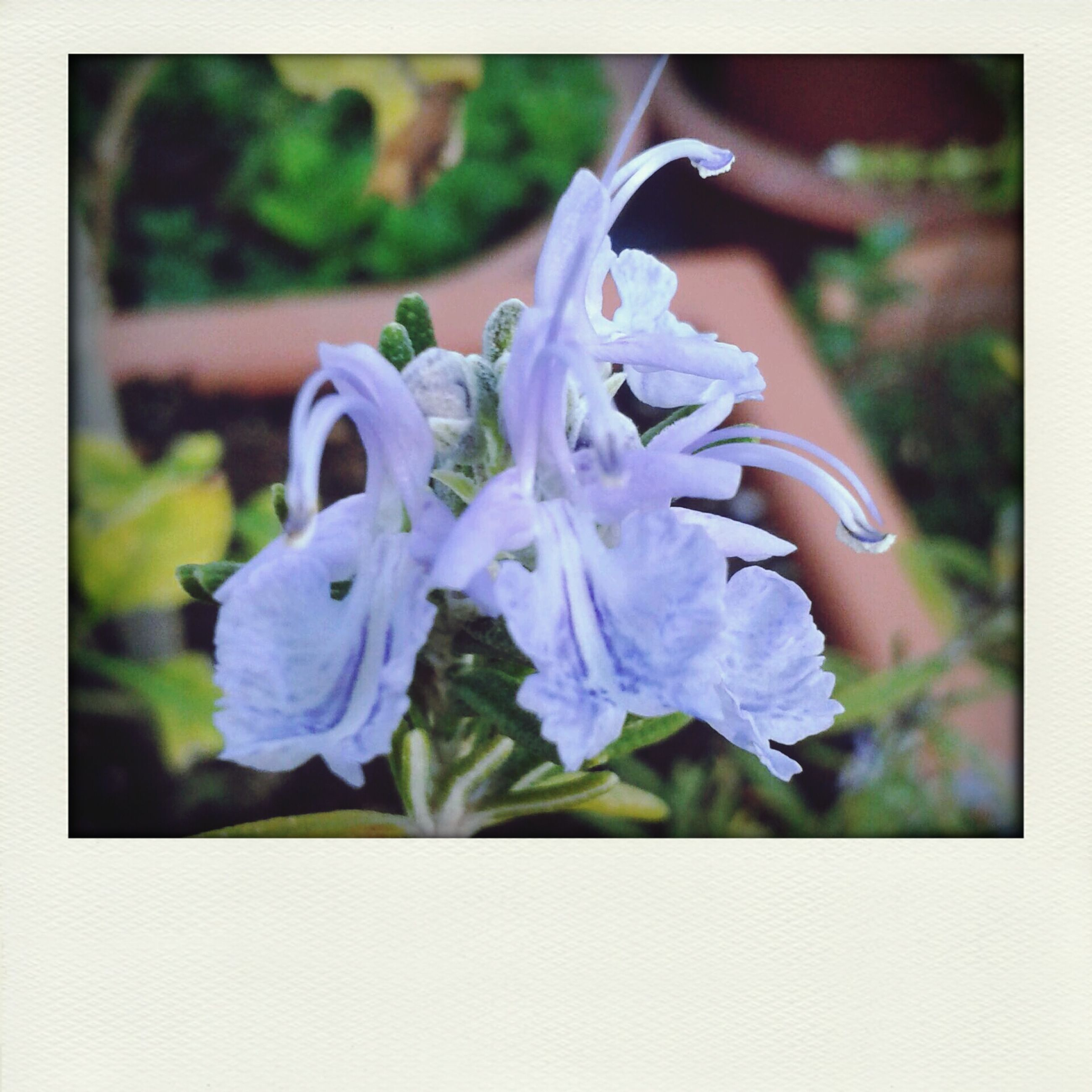 transfer print, flower, auto post production filter, fragility, close-up, petal, focus on foreground, freshness, purple, beauty in nature, flower head, blue, growth, plant, nature, blooming, water, selective focus, no people, day