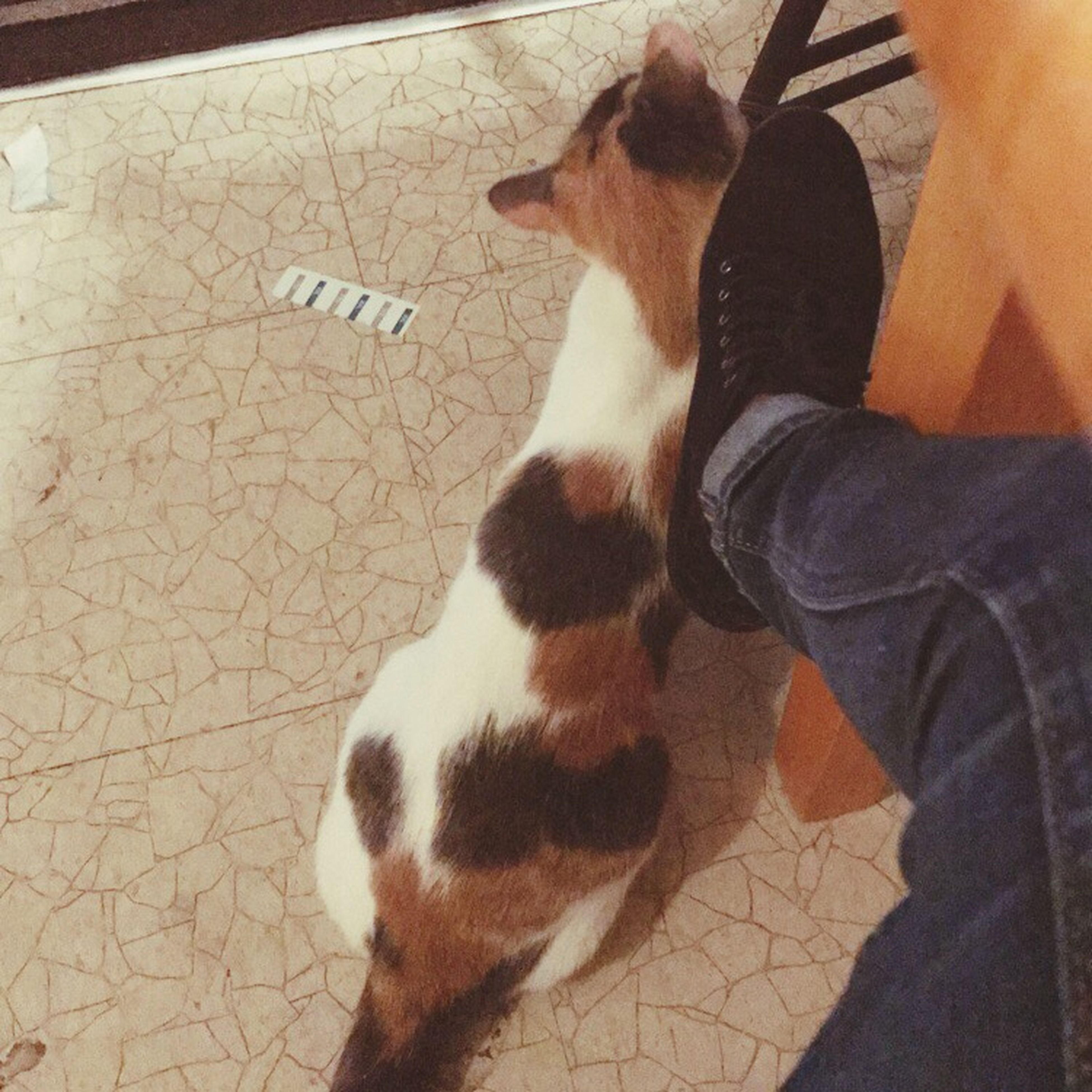pets, domestic animals, mammal, one animal, dog, one person, real people, high angle view, lifestyles, pet owner, human body part, women, leisure activity, human leg, low section, human hand, day, feline, indoors, adult