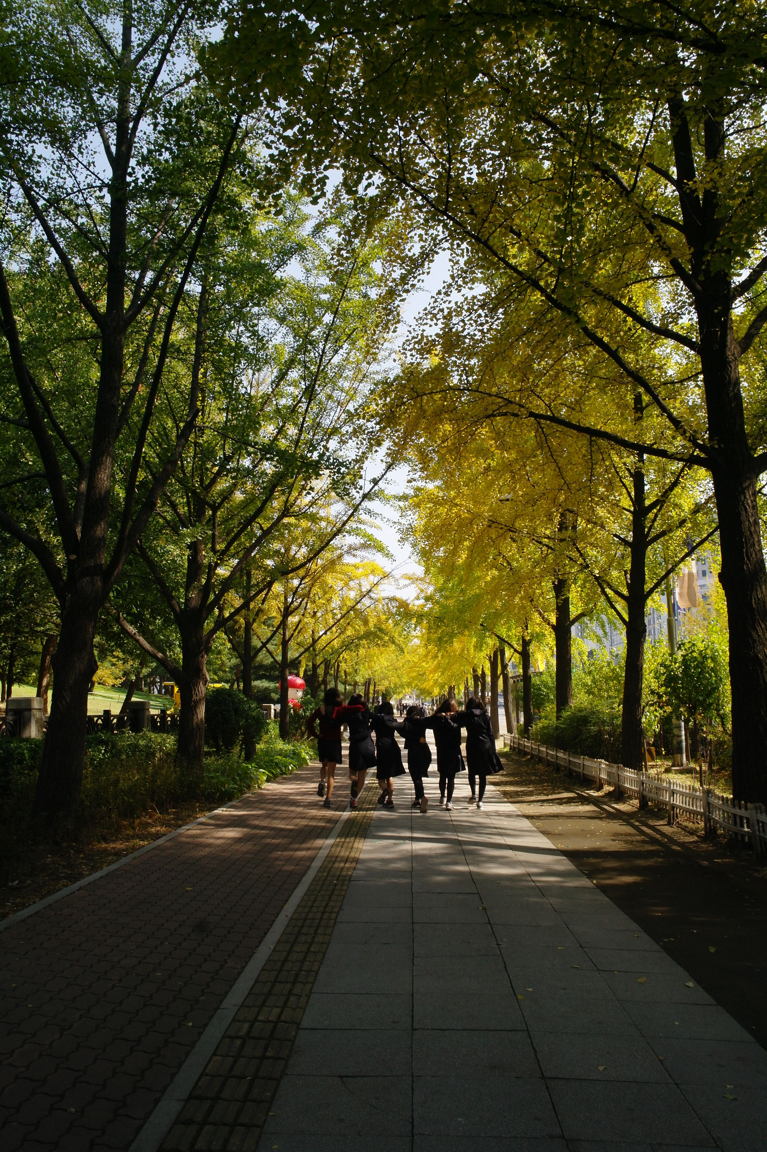 tree, lifestyles, men, walking, person, the way forward, leisure activity, rear view, footpath, togetherness, full length, treelined, park - man made space, growth, day, group of people, large group of people, street