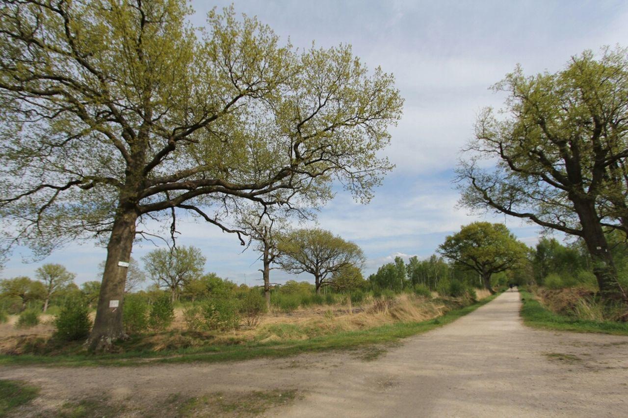 Landscape Trees Forest Landscape_Collection