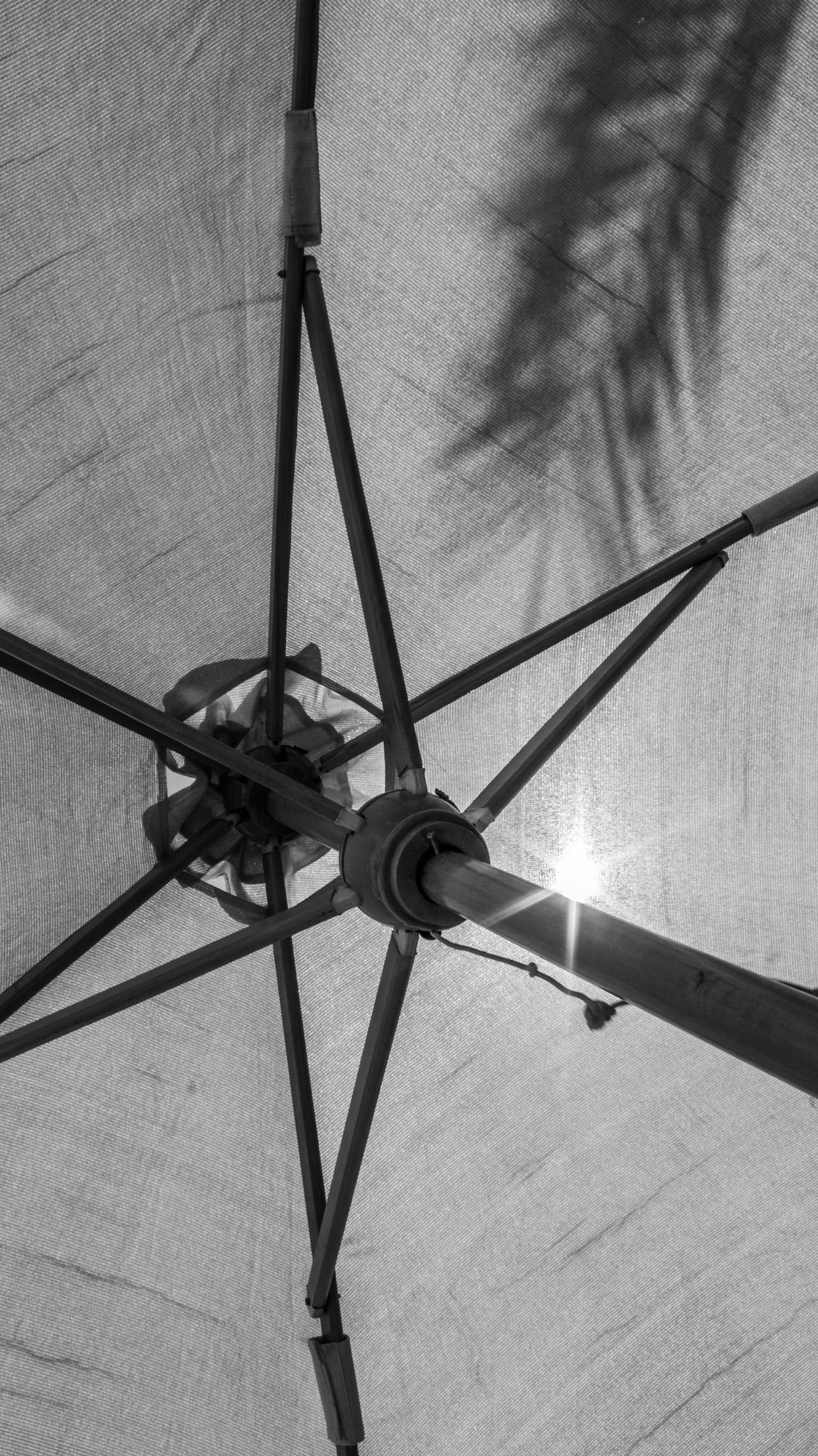 Blackandwhite Blackandwhite Photography Day Fabric Lookingup Low Angle View No People Outdoors Palm Leaf Palm Tree Parasol Sunlight Sunprotection