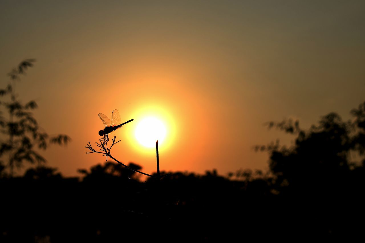 A living chopper... Sunset Nature Dragonfly_of_the_day Beauty In Nature Outdoors Dusk Sky Nikond3300 Photographing Nikon Scenics Travellingphotography Sun Tree No People Focus On Foreground