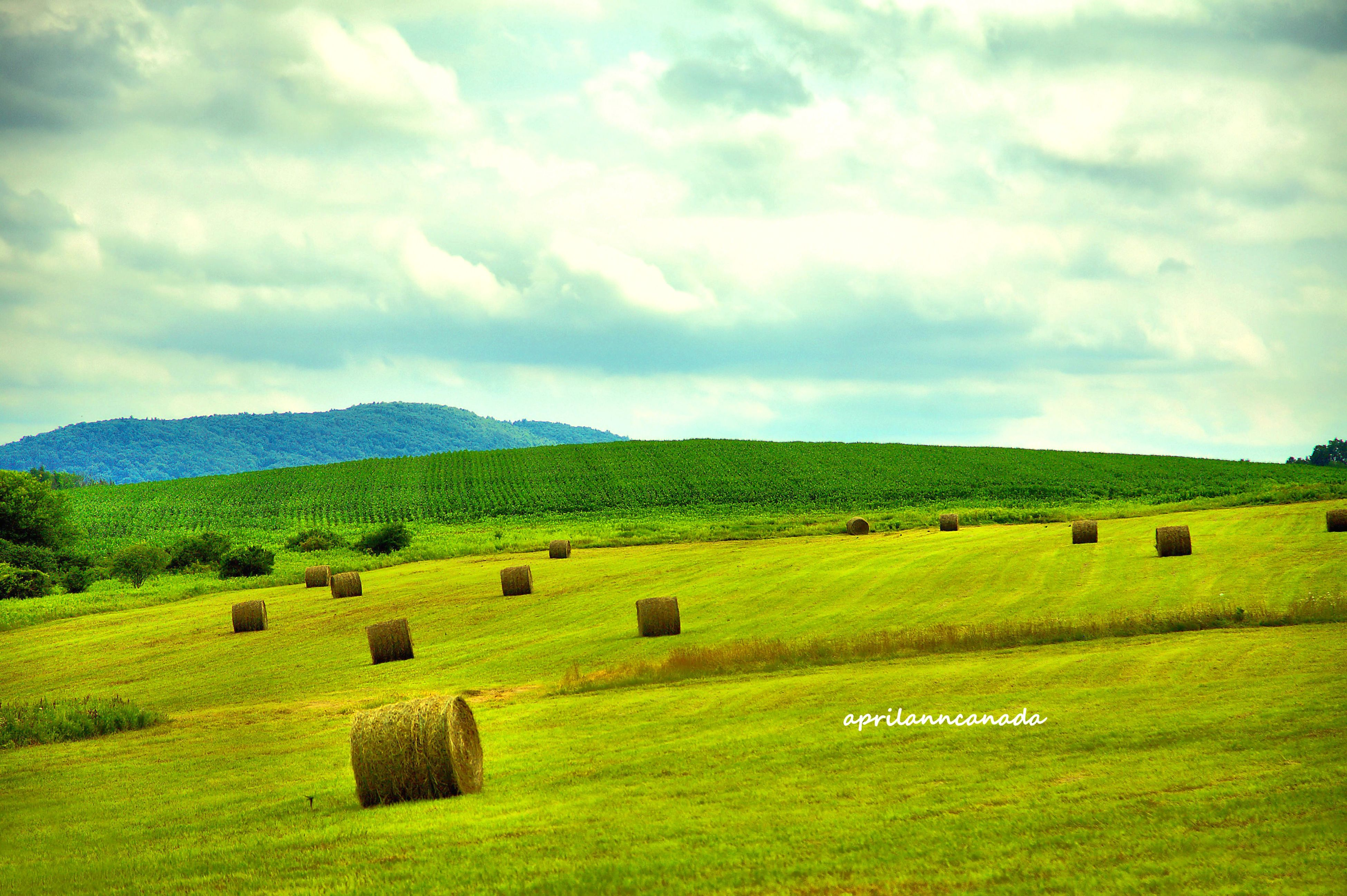 landscape, grass, sky, field, tranquil scene, tranquility, scenics, green color, cloud - sky, rural scene, beauty in nature, grassy, nature, cloudy, cloud, agriculture, mountain, non-urban scene, farm, pasture