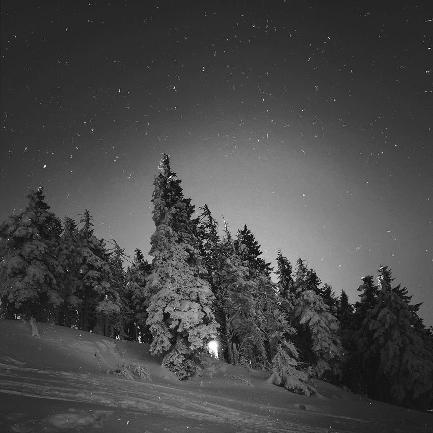 Check This Out Romania Bw_collection Black And White Blackandwhite Trees TreePorn Landscape OpenEdit