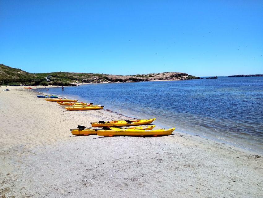 Blue Kayak Clear Sky Sea Outdoors Water Oar Transportation Water Sports Kayaking Australia Western Australia Penguin Island Beach