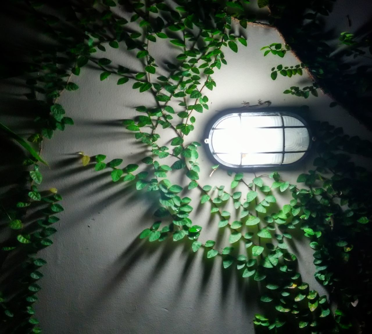 green color, plant, growth, ivy, window, tree, leaf, no people, indoors, day, nature, hanging, electricity, shadow, illuminated, fragility, close-up