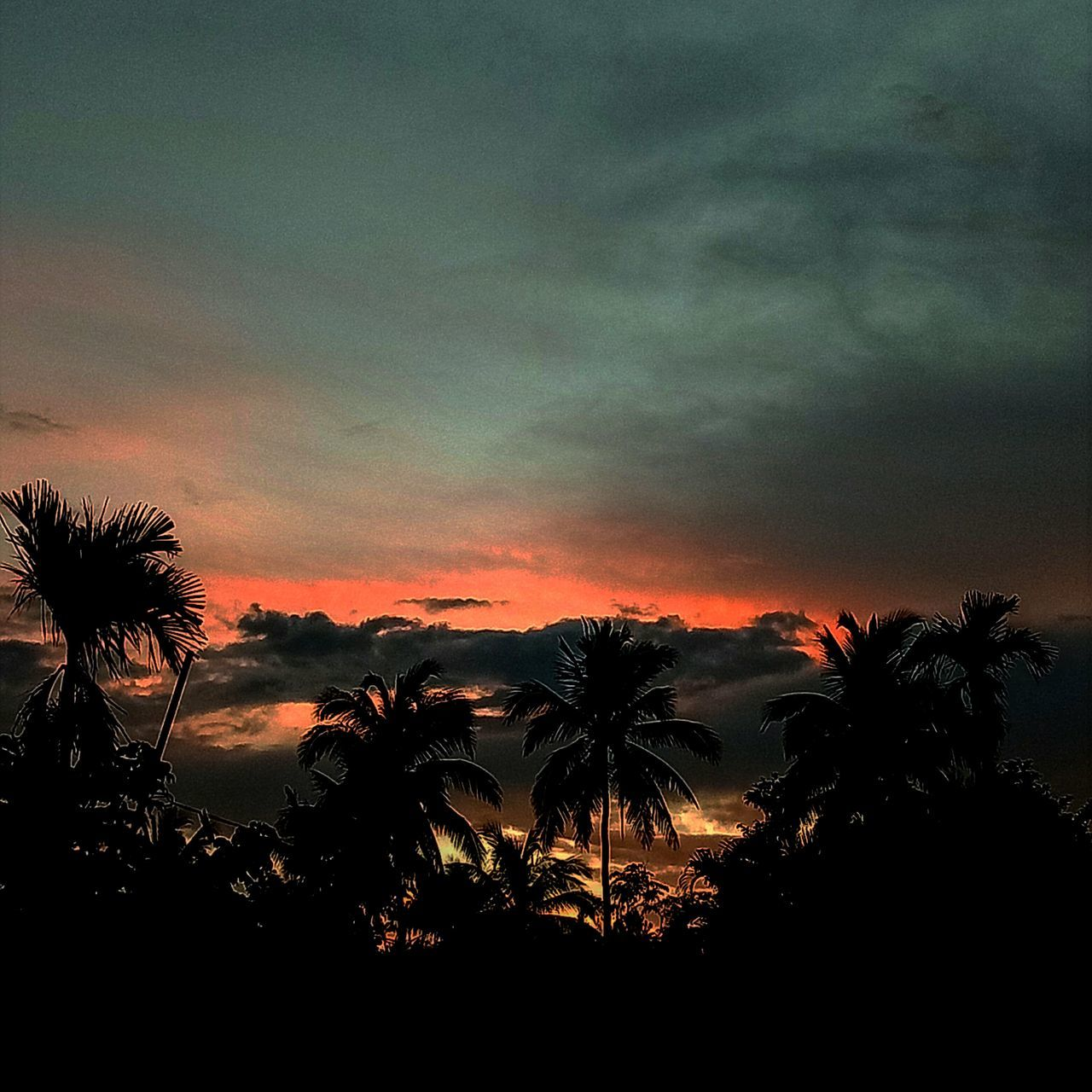 palm tree, tree, silhouette, sky, sunset, tranquility, beauty in nature, nature, tranquil scene, scenics, no people, cloud - sky, growth, outdoors