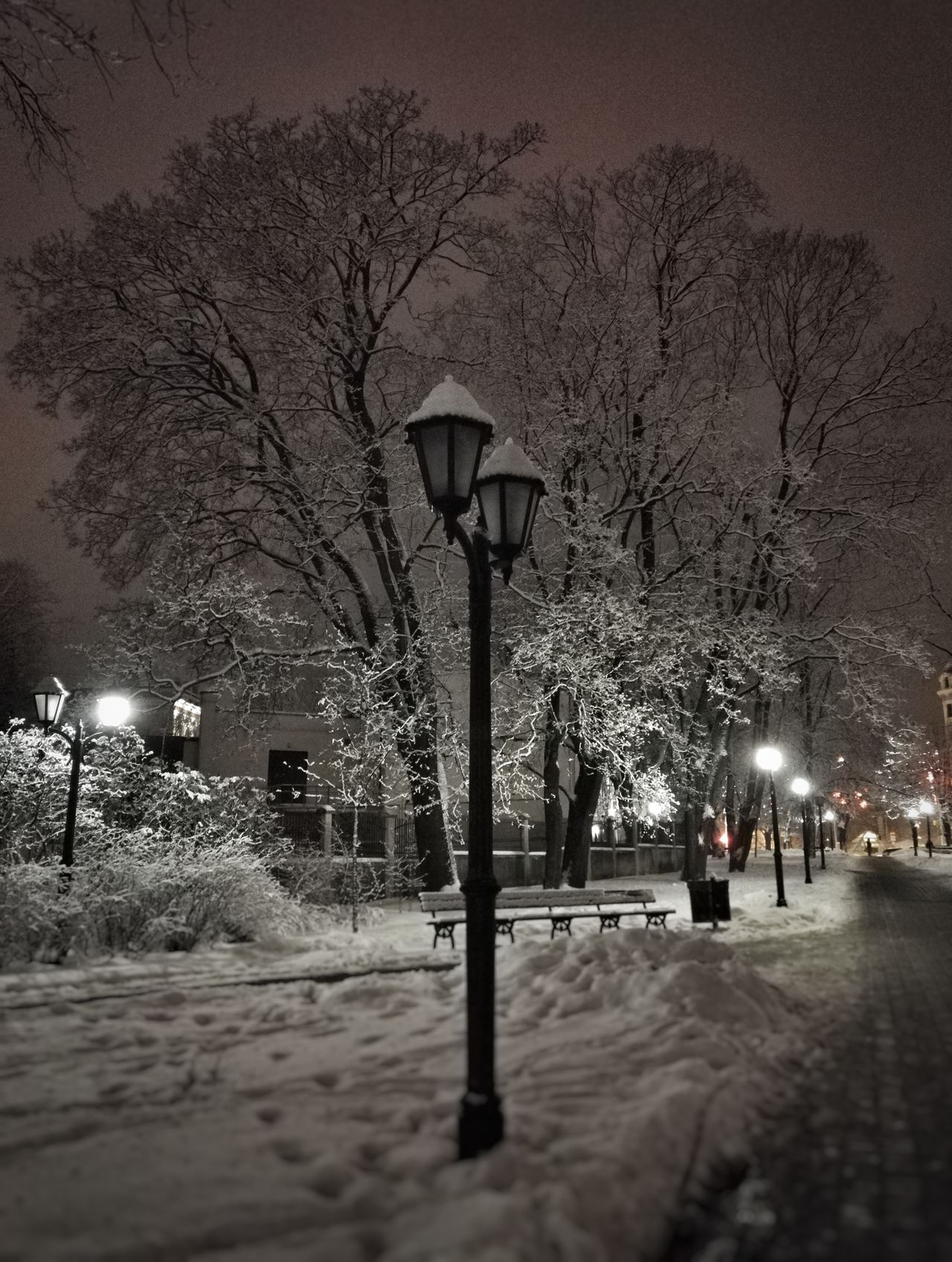 Street Light Cold Temperature Tranquility Winter Black And White Enjoying Life Snow Hello World Weather Night City Tree Lantern