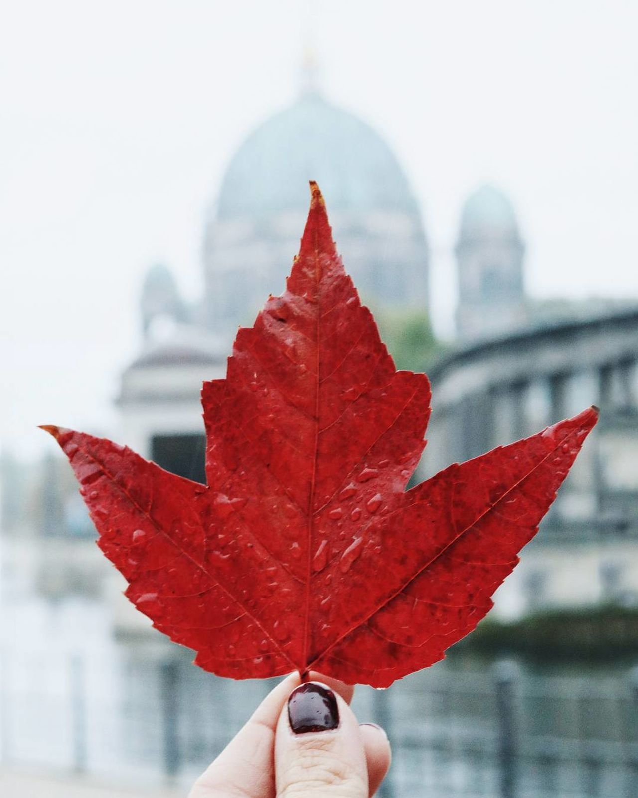 Focus Object Close-up Outdoors Human Hand Maple Leaf EyeEm Deutschland City Life EyeEm Best Shots Autumn Beauty In Nature Human Finger