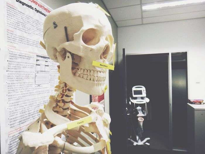 Skeleton Skeleton Skeletons Bones Medical Anatomy Physiology  Study Hospital Orthopedics Australia Still Life Still Life Photography StillLifePhotography My Favorite Photo