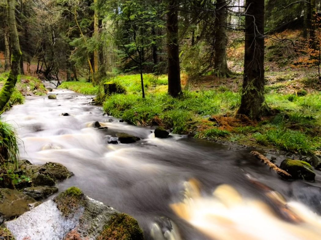 Tree Forest Outdoors No People Stream - Flowing Water Beauty In Nature Water River Day Moss Grass Tranquility Rapid