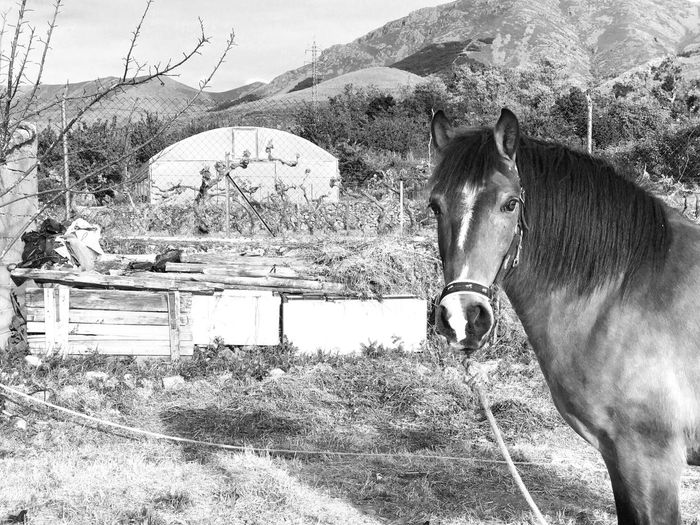 Horse Domestic Animals Mammal Animal Themes One Animal Livestock Day Outdoors Mountain Field Nature No People Paddock Portrait Grass Sky Welcome To Black Blackandwhite Black And White Rural Scene Farm Life Rural Landscape Rural Scenes Countryside Life Farmland