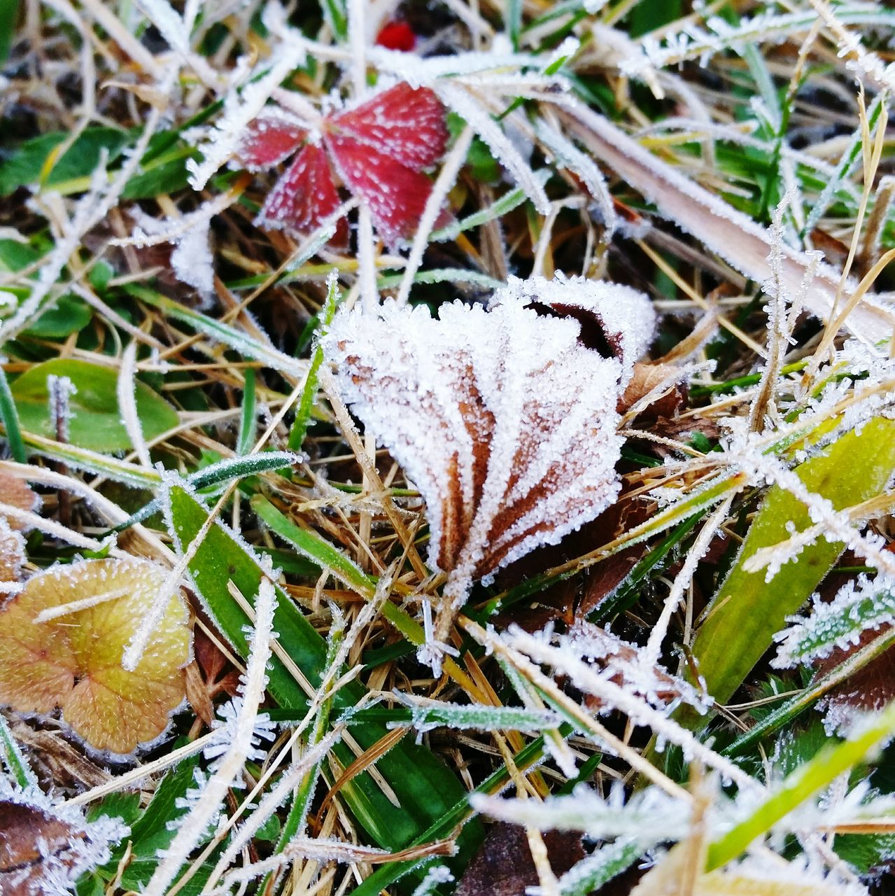 cold temperature, winter, snow, nature, leaf, day, frozen, weather, no people, high angle view, field, outdoors, close-up, beauty in nature, fragility