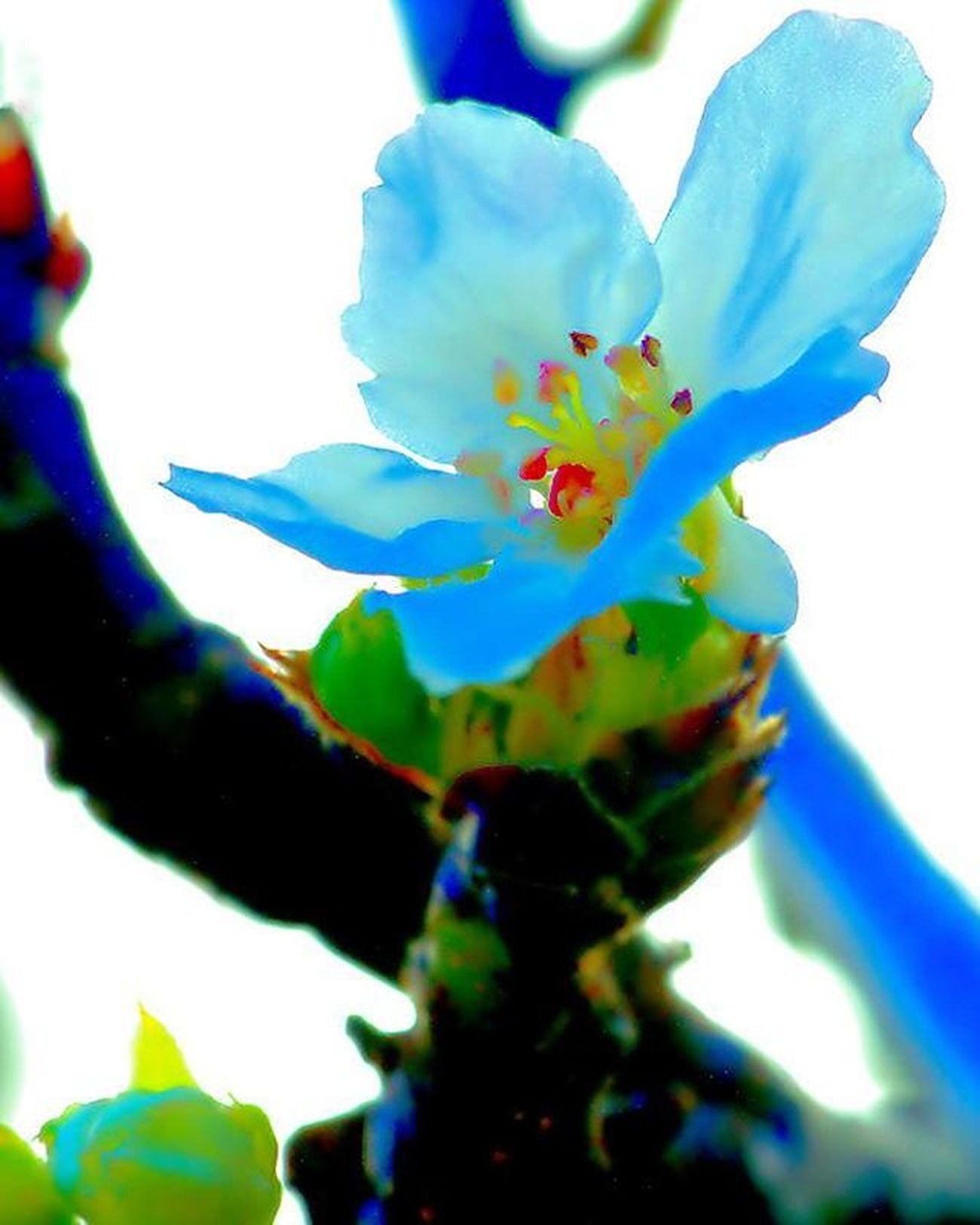 Blooming =) yes flowers are starting to bloom. For this, I looked at the perfect angle and light that shined to it and ... uh huh how about backlit with this blue light on it. yeah... colors =) 1) Macroworld_tr 2) Tv_colors 3) Ig_addicts_fresh 4) Fotofanatics_nature_ 5) Naturehippys 6) Macro_perfection 7) Sn_feb4 8) Natureloversgallery 9) Pocket_family 0) Splendid_dof 1) Tgif_nature 2) Heavenlyflowerz 3) Igglobalclubmacro 4) Pocket_colors 5) Fotofanatics_macro_ 6) Electric_macro 7) Resourcemag 8) Na_natures_art 9) Splendid_lite 0) Igbest_macros 1) Fs_macro 2) Wms_macro 3) Macro_secrets 4) Ig_alls 5) Macro_holic 6) tv_depthoffield 7) jj_indetail 8) best_macro 9) show_us_macro 0) macro_vision