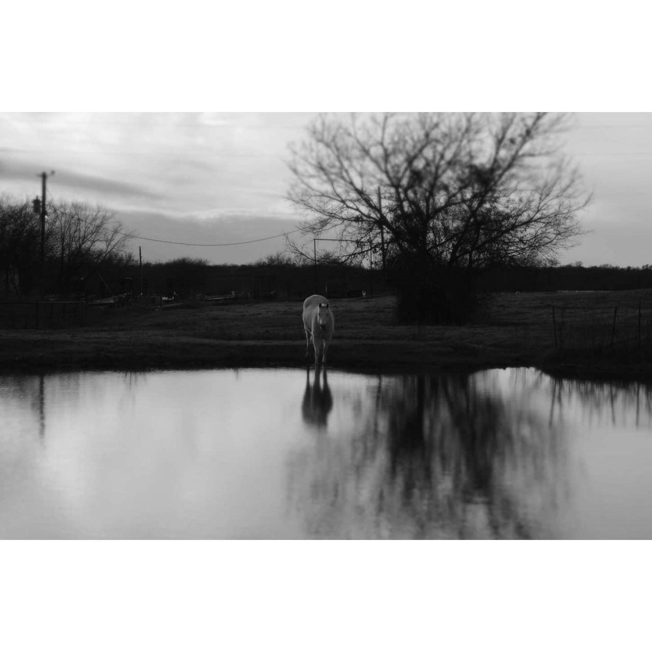 reflection, water, one person, rear view, walking, real people, full length, day, lake, nature, outdoors, one animal, sky, bare tree, women, standing, beauty in nature, tree, mammal, people