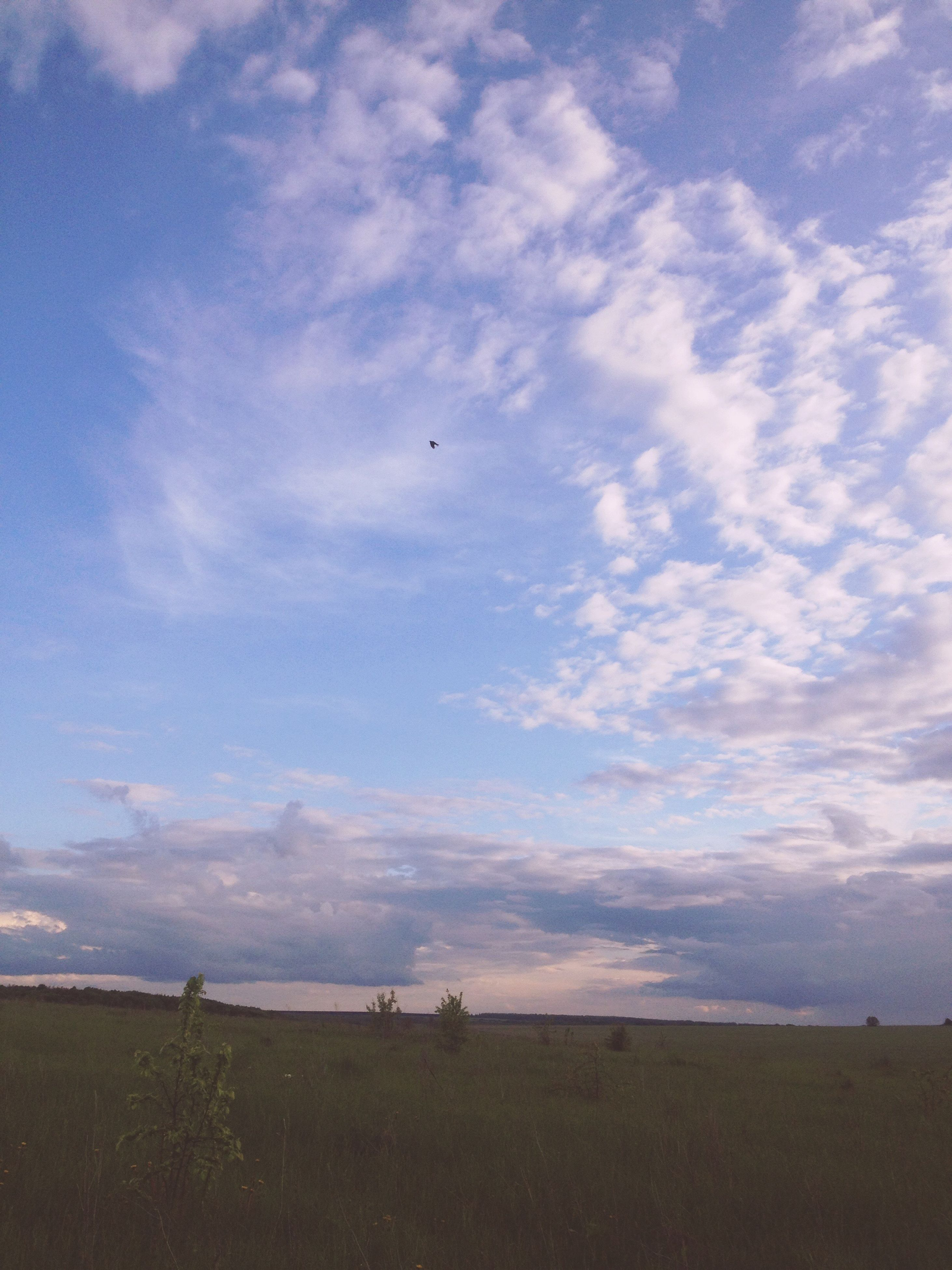 sky, cloud - sky, tranquil scene, tranquility, landscape, scenics, cloud, beauty in nature, field, nature, flying, cloudy, animal themes, bird, horizon over land, outdoors, idyllic, day, rural scene, grass