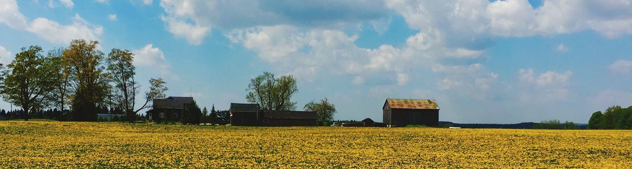 field, sky, agriculture, nature, cloud - sky, beauty in nature, landscape, yellow, tree, day, no people, outdoors, scenics, rural scene, growth