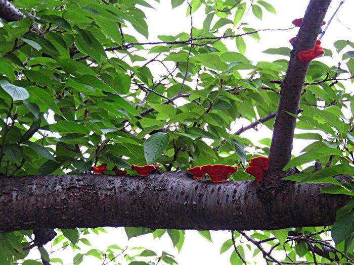 きのこーのこのこ♪ キノコ Nature Fungi Fungi On A Log Tree Nature TreePorn
