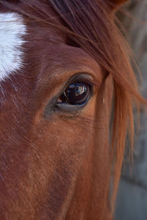 Close-up Headshot Animal Hair Extreme Close Up Countrystyle Horse Horse Life Horse Photography  Horses Buenos Aires Mode Of Transport TheWeekOnEyeEM TakeoverContrast Travel Destinations Nikon NikonD5500 Full Frame Horse Eye Horse Photography