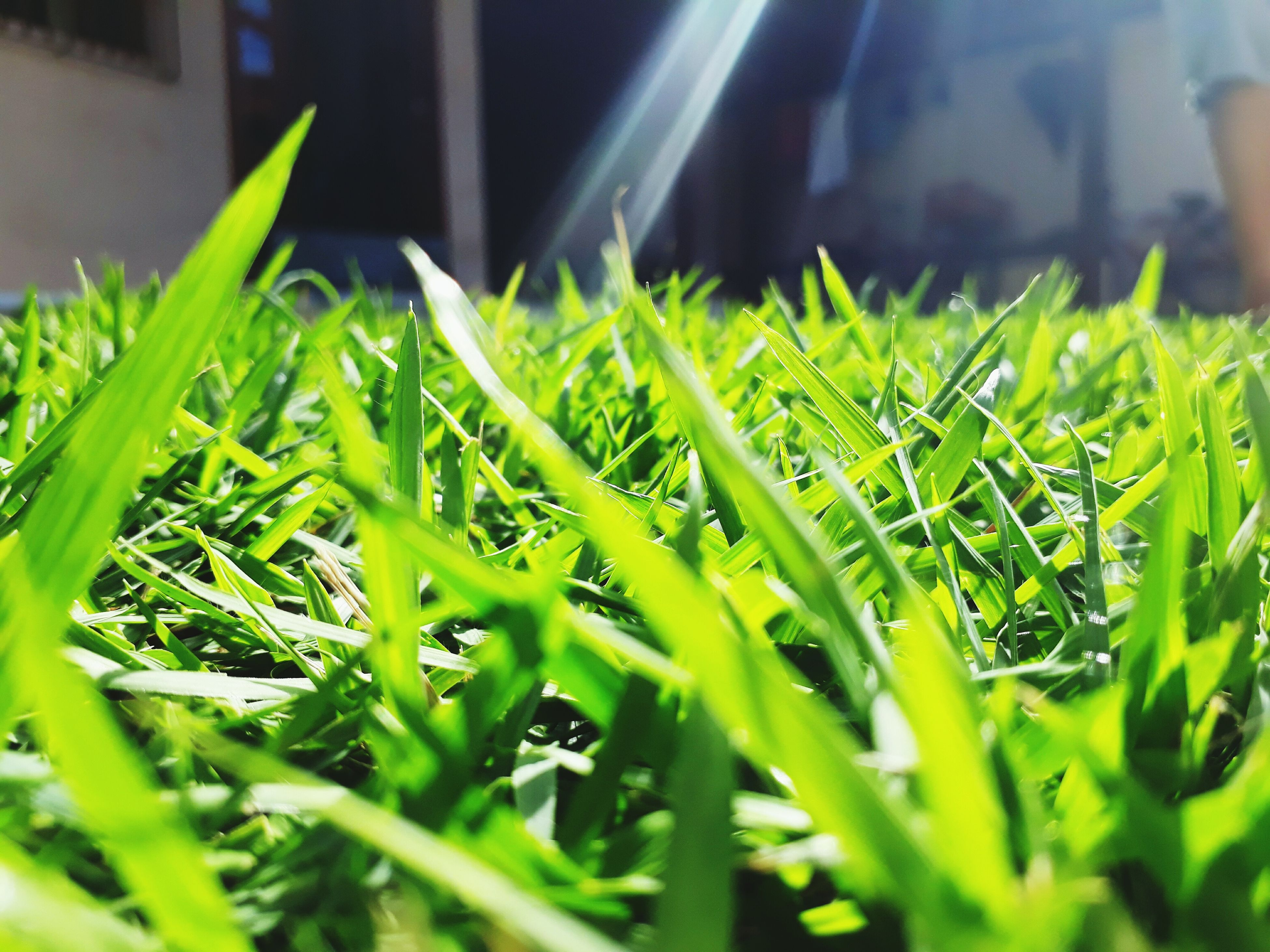 green color, growth, grass, close-up, day, no people, plant, outdoors, nature, freshness, greenhouse