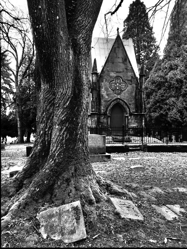 Graveyard Collection Graveyard Beauty Cemetery Scenic Portland, OR Antique Graveyard Black & White Blackandwhite Gravestones Black And White Trees TreePorn Nature Oregon Nature Photography