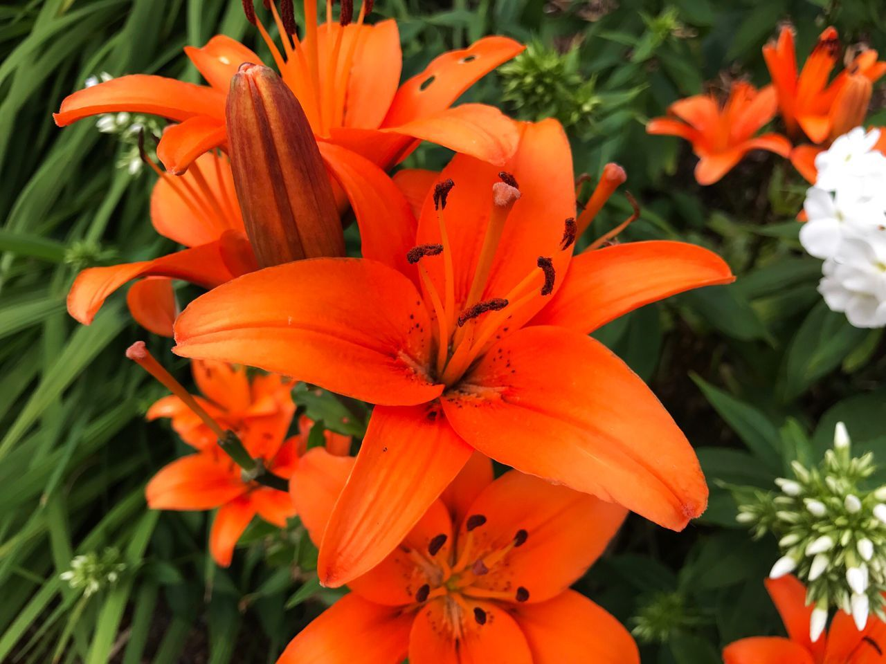 flower, orange color, petal, beauty in nature, growth, flower head, freshness, nature, fragility, plant, blooming, day lily, outdoors, no people, day, close-up