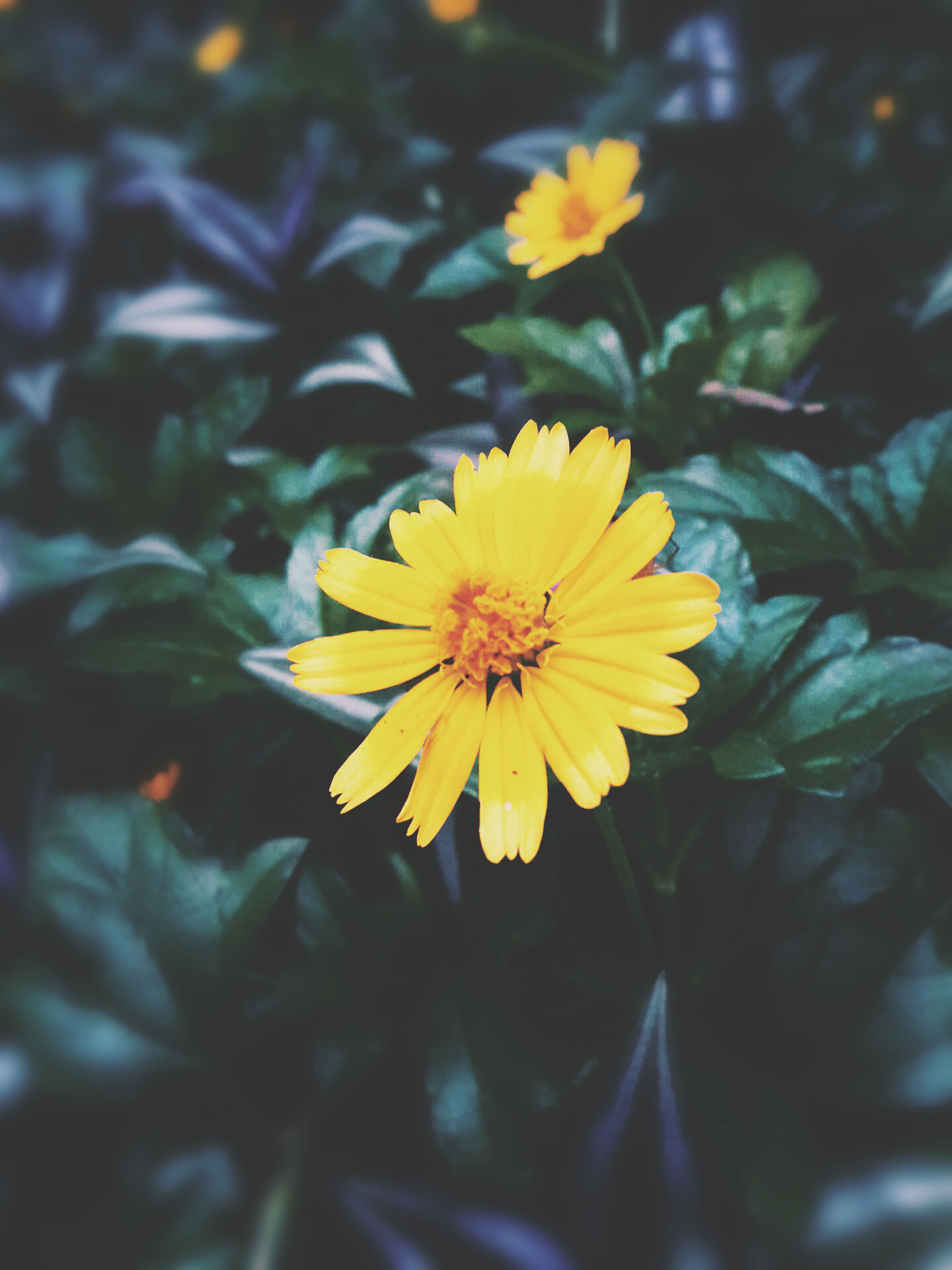 flower, petal, yellow, freshness, flower head, fragility, growth, beauty in nature, pollen, blooming, close-up, focus on foreground, nature, plant, single flower, in bloom, day, outdoors, blossom, no people