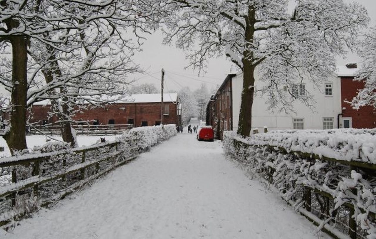winter, snow, cold temperature, weather, car, environment, transportation, snowing, extreme weather, nature, white color, storm, tree, street, bare tree, outdoors, no people, building exterior, built structure, land vehicle, frozen, city, day, branch, beauty in nature, snowdrift, snowflake, architecture