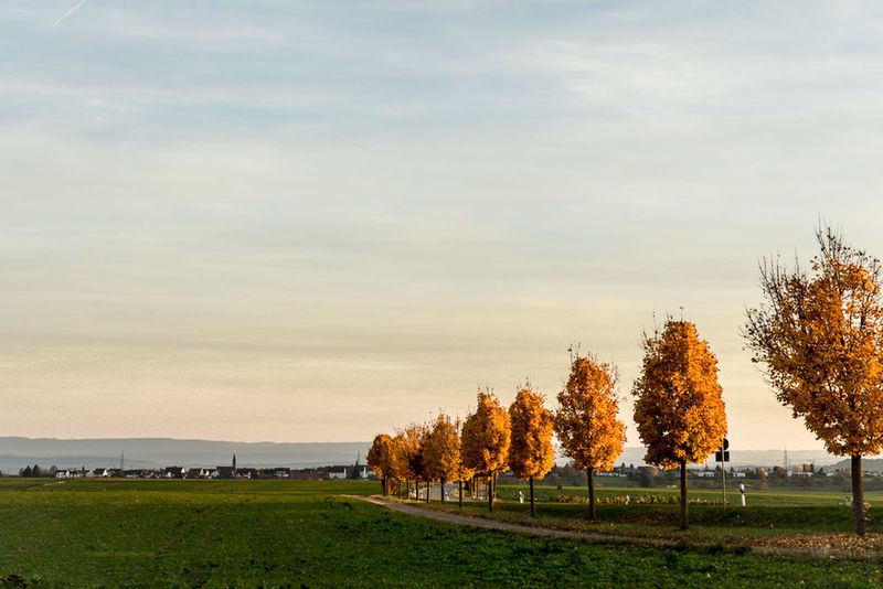The orange road Tree Grass Nature Beauty In Nature No People Sky Outdoors Day Sunlight Autumn Colors Oberjessingen Sunset The Drive.