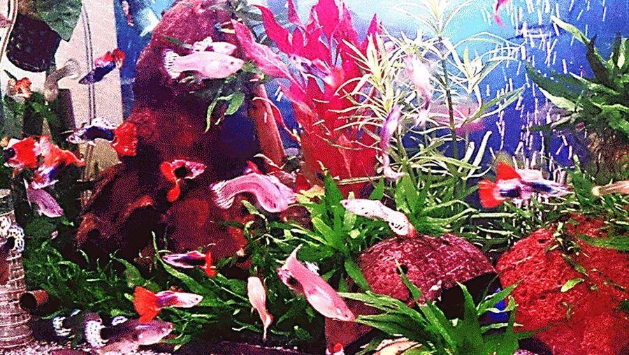 Fish Głupiki Rybki Akwarium Ryby Aqarium Glupiki Rosliny Botanical Gardens Colour Of Life Nature Plant Freshness Fishes Aquarium Guppies