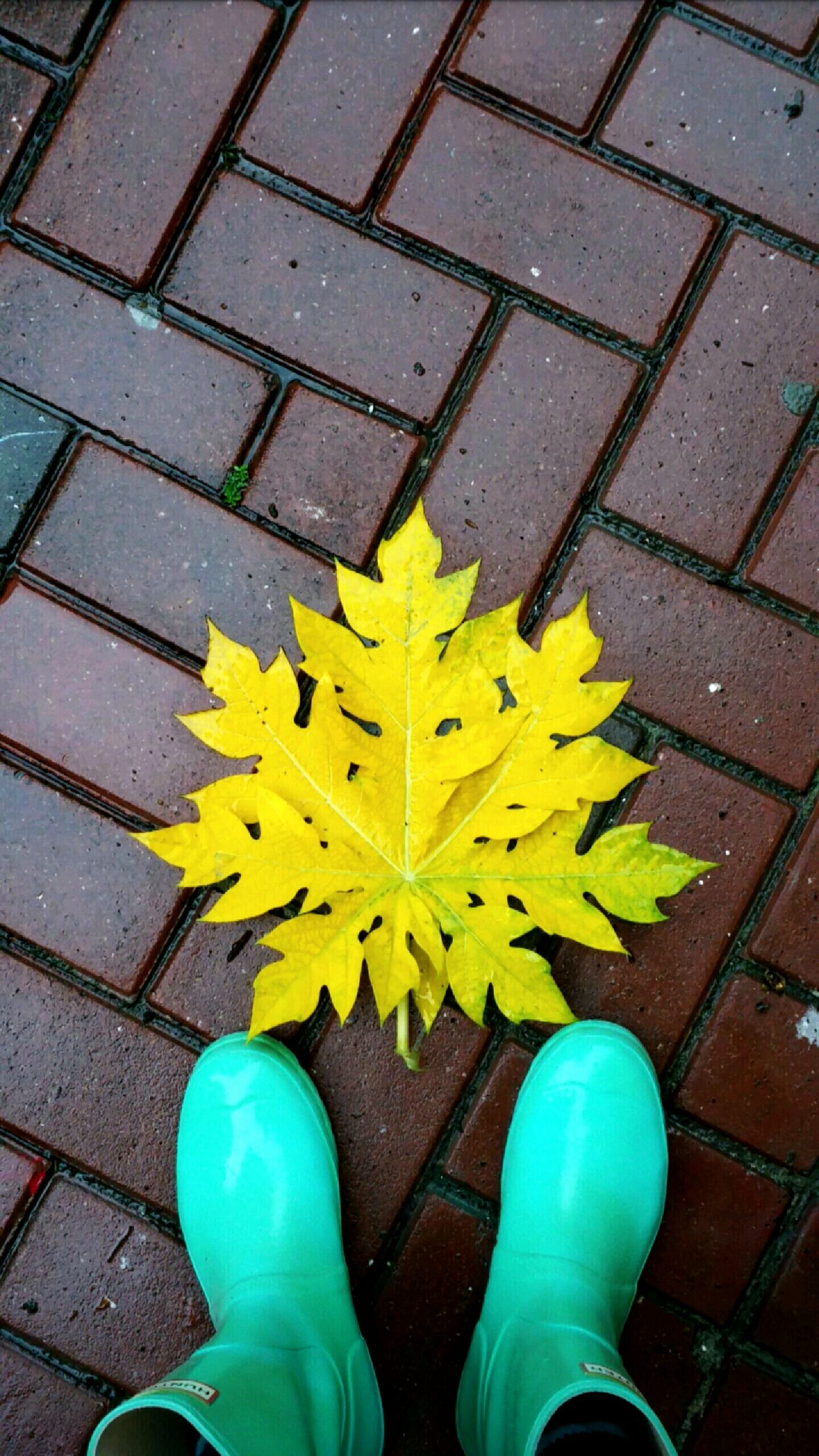 Having donned my Mint Green Wellies  , I chanced upon a vivid Yellow... Fractal Leaf? (I'm no botanist.)