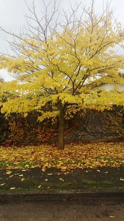 No People Beauty In Nature Tree Tree_collection  Tree_collection  Yellow Trees And Sky Nature Nature_collection Nature Photography
