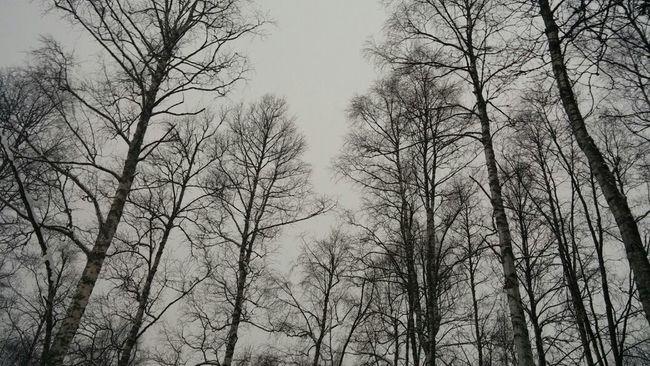 grey sky.