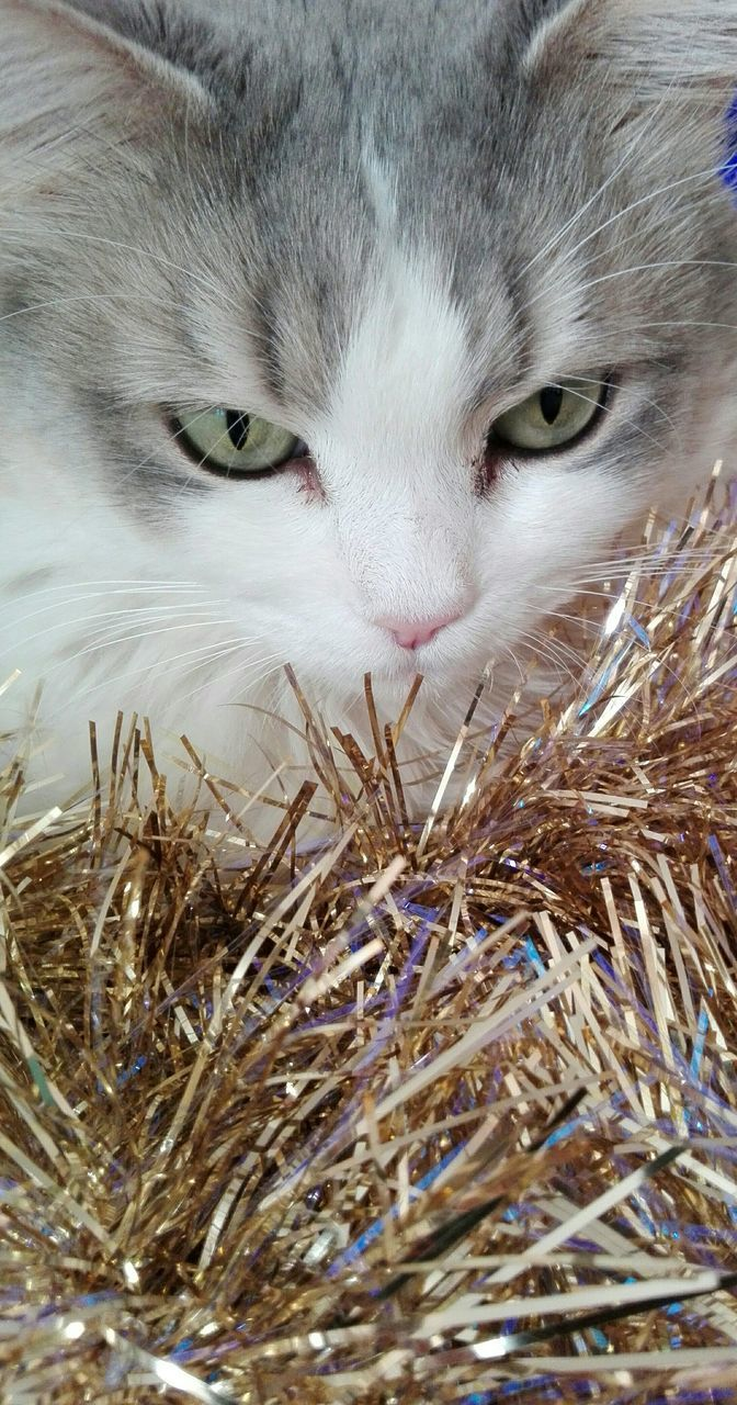 Close-Up Of Cat And Tinsel