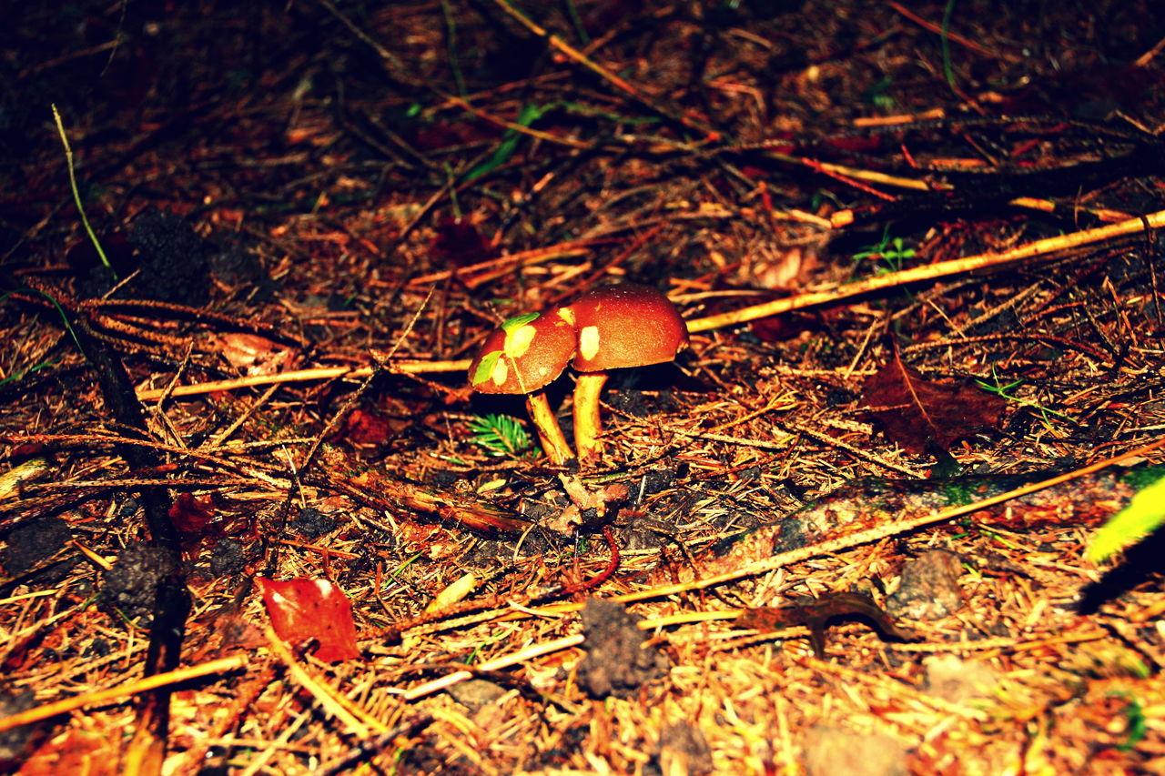 Forest Fungi Fungus Fungus 🍄 Mushroom Mushroom Collection Mushroom_pictures Mushroomphotography Mushrooms Mushrooms Gallery Mushrooms 🍄🍄 Nature Plant Xerocomellus Chrysenteron