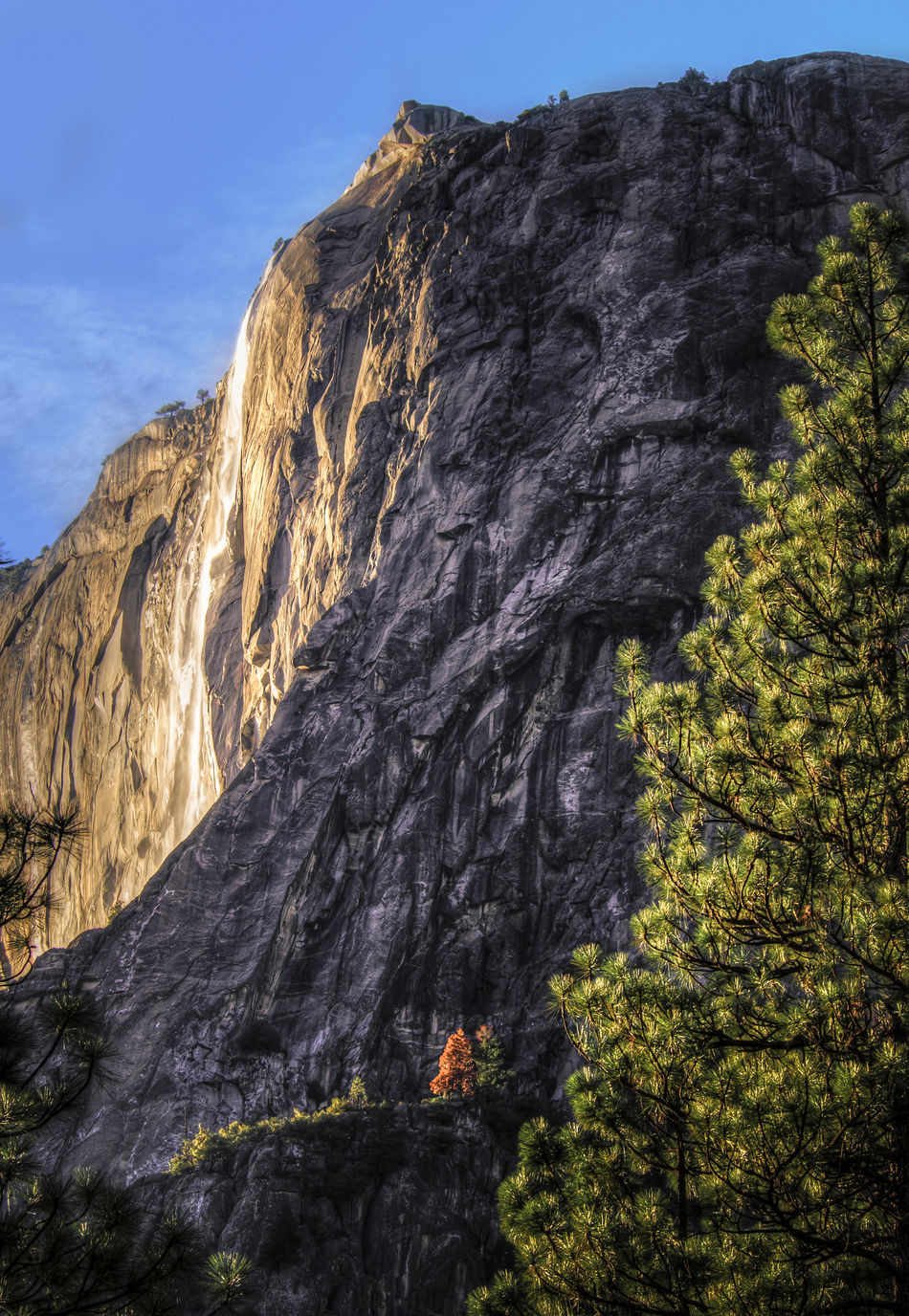 Beauty In Nature Cliff Nature Rock Formation Scenics Tranquil Scene Tranquility Tree Waterfall Yosemite Yosemite National Park Perspective mountains Glowing Waterfall Waterfall Horsetail Falls Day Glow Landscape Glowing Water Fire Fall Lone Red Tree Scale  Small Red Tree 43 Golden Moments Pine Trees