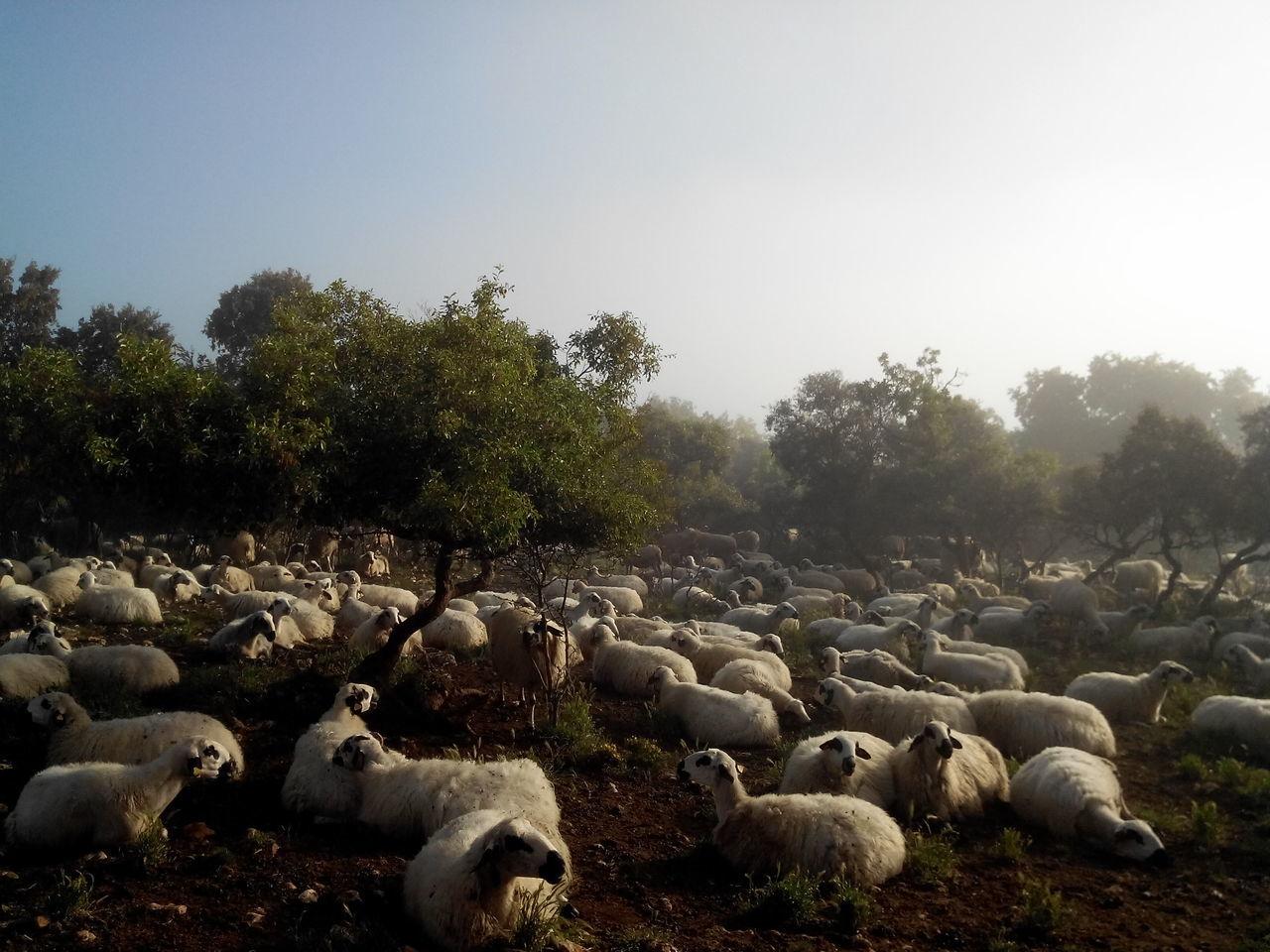 Camino CaminodeSantiago El Camino De Santiago Jakobsweg Morgen Morning Pilgern Pilgrimage Schafe Sheeps Sommer Summer Way Of Saint James