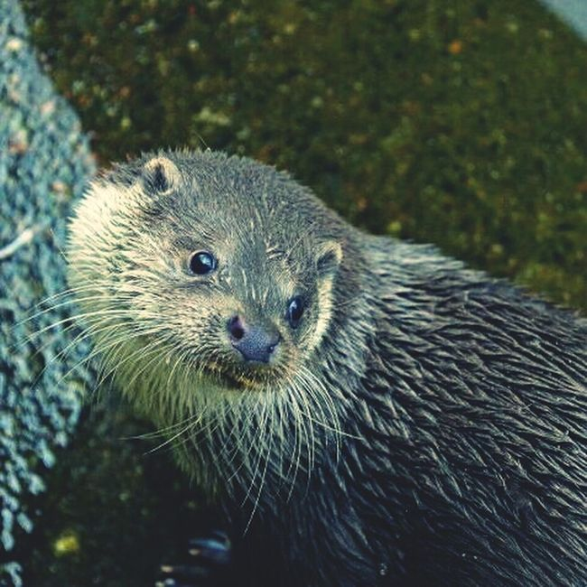 Otter Highland Wildlife Park