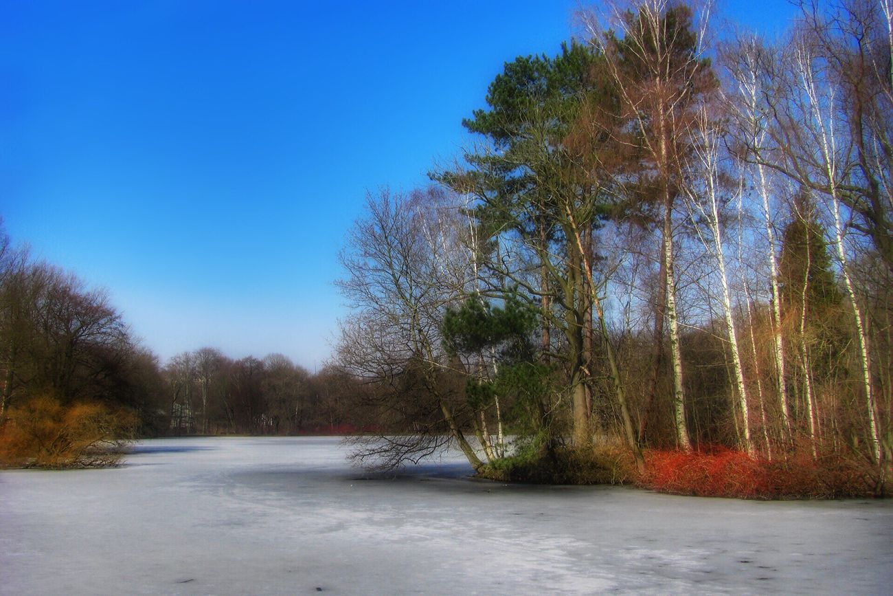 A frosty day ... frozen lake Tree Nature Beauty In Nature Clear Sky Cold Temperature Tranquility Water No People Outdoors Landscape Landscape_Collection EyeEm Best Shots Germany Dezember Snow ❄ Scenics Winter Growth Snow Day Sky Bare Tree