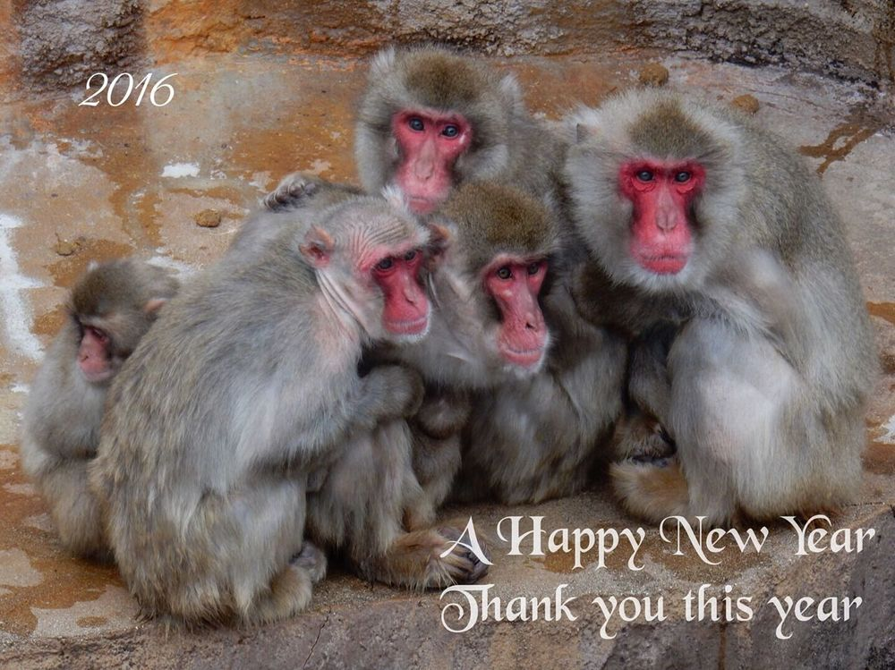 Happynewyear2016 Japanese Monkey Nature Nature_collection Ehime Zoo 申年 あけましておめでとう